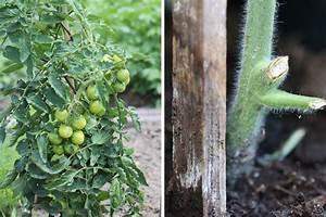 Tomaten Balkon Kübel : tomaten im topf und k bel wie viel erde substrat sie brauchen ~ Yasmunasinghe.com Haus und Dekorationen