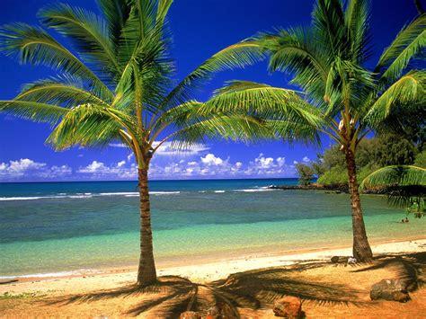 Tropical Wallpaper Desktop Annaharper