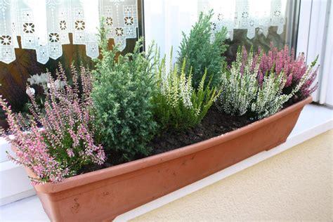 Herbst Winterbepflanzung Garten by Herbstliche Blumenk 228 Sten Und K 252 Bel