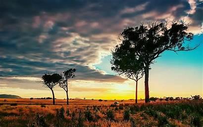 African Background Wallpapers Savanna Trees Desktop Laptop