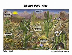 The Desert Food Web - Biome2