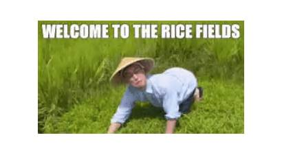 Rice Fields Welcome Japan Gifs Sd Mp4