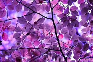 Wallpaper, Sunlight, Trees, Leaves, Digital, Art, Nature, Purple, Branch, Symmetry, Pattern
