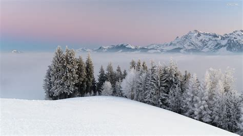 Foggy Evergreen Forest Wallpaper Foggy Winter Day In The Mountains Wallpaper