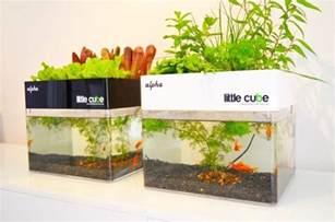 home aquaponics buscar  google gardening