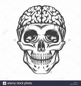 Human Skull with open brain. Vector illustration in tattoo ...