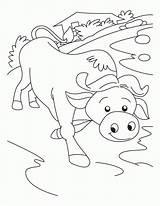 Coloring Buffalo Pages Outline Printable Bills Bison Popular Sheets Coloringhome Momjunction sketch template
