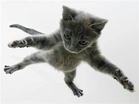 funny cat jumping  cool wallpaper funnypictureorg