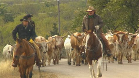 cattle drive texas country reporter nethugs