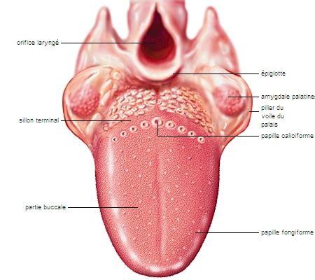 encyclopedie larousse en ligne bouche