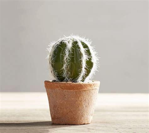 faux potted mini cactus pottery barn