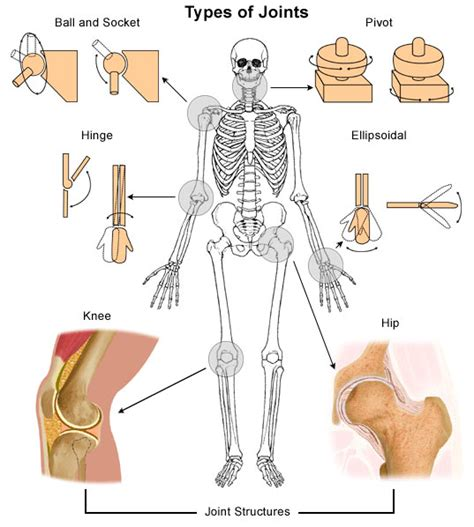 all joinery types of joints in the human human for ency123
