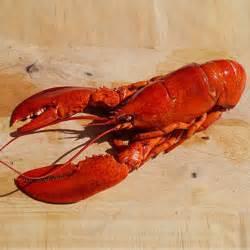 comment cuisiner le homard cuit surgelé homard canadien ou homard français lequel choisir