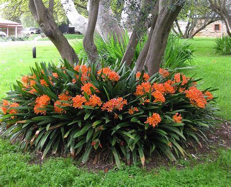 outdoor lilies plants flowers 187 garden plants