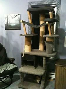 Arbre à Chat Fait Maison : img 1298 arbres chats mymitte photos club doctissimo ~ Melissatoandfro.com Idées de Décoration
