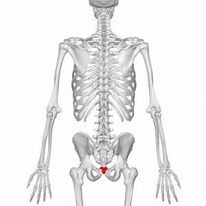 Coccyx, oh my coccyxPelvic Health and Rehabilitation Center  Coccyx