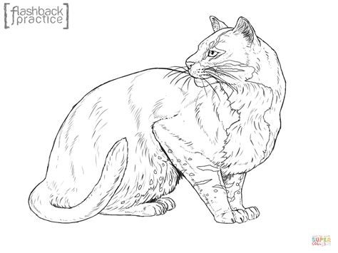 El Dorado Kleurplaat by Asian Golden Cat Coloring Page Free Printable Coloring Pages
