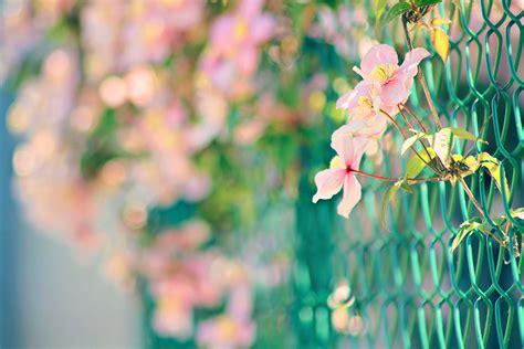 Pink Flowers Hd Desktop Wallpapers 4k Hd