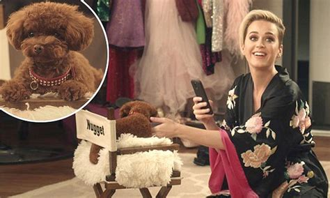 katy perrys dog nugget wins  starring role   campaign