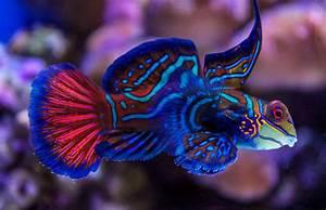 Beautiful Fish | The most beautiful fish at the Aquarium ...