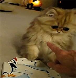 sad-kitten-cat-cute-funny-adorable-lol.gif