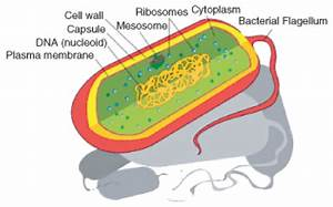 Introduction To Cells  U2039 Opencurriculum