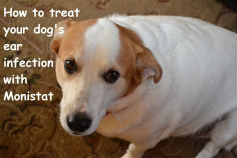 treat  dogs ear infection  monistat