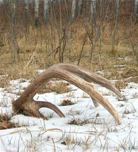 deer antler shedding season shed iron cooker