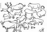 Cave Coloring Pages Lascaux Printable Getcolorings Paintings Sheet Prehistory Painting Peinture Rupestre Template Age Wordpress sketch template