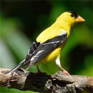Oiseau Jaune Et Bleu : oiseau jaune petit oiseau bleu et jaune jett ~ Melissatoandfro.com Idées de Décoration