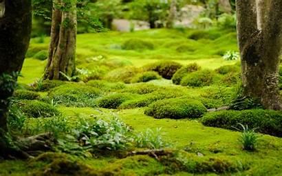Moss Trees Desktop Garden Temple Background Kyoto