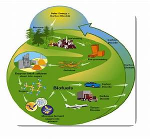 The Carbon Cycle And Biofuel  Carbon Dioxide  Co2  From