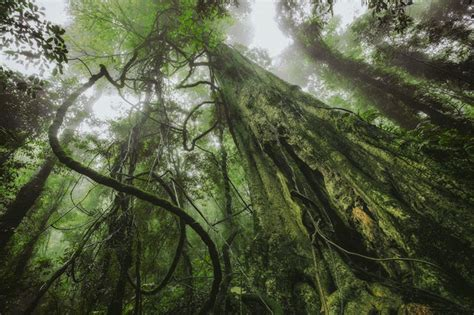 tips  capturing  essence   rainforest
