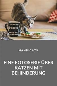 Wie Fange Ich Eine Katze : ich bin noch immer eine katze fotografin zeigt wie wundervoll katzen mit behinderung sind ~ Markanthonyermac.com Haus und Dekorationen