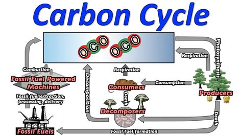 carbon cycle song  ws  video youtube
