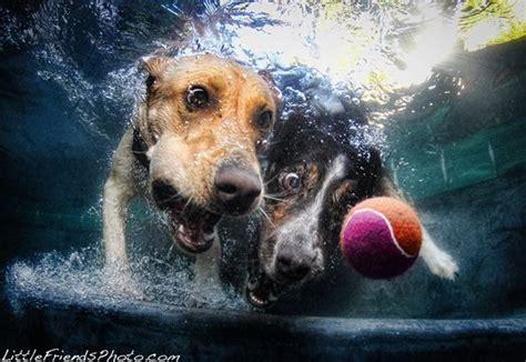 unusual photography  underwater dogs design swan