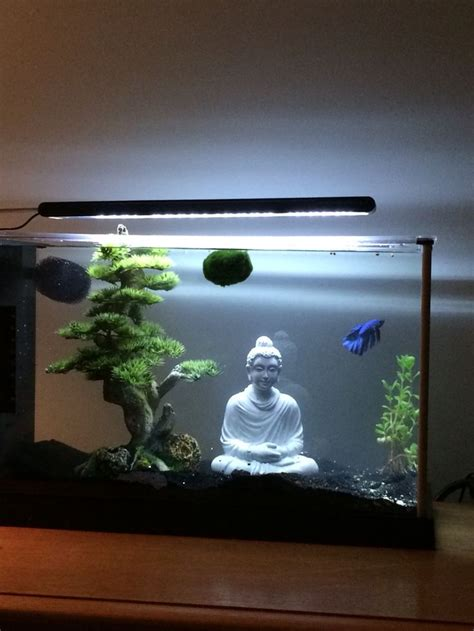 best 25 betta fish tank ideas on pinterest betta tank