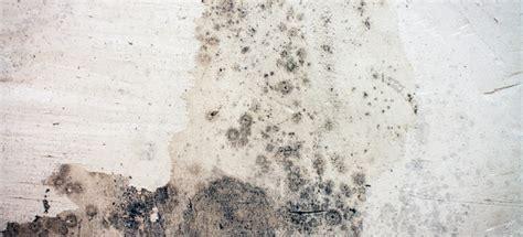 remove mold  concrete basement walls