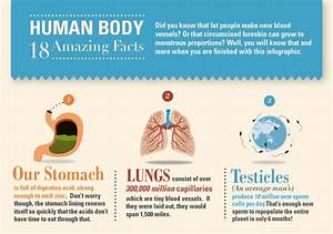 18 Amazing Facts About The Human Body [Infographic ...