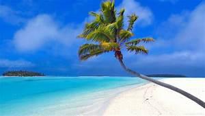 Maldives beach palm wallpaper