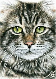 Cats, Face, Drawing, By, Nicole, Zeug