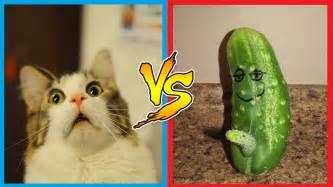 cucumber cat cats vs cucumbers cats scared of cucumber cats
