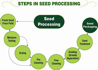 Processing Seed Steps Conditioning Seeds Facilities