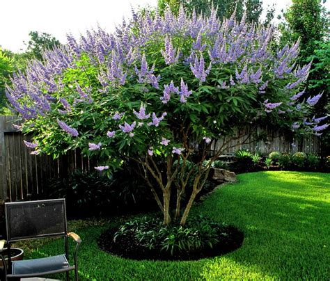 flowering trees sun sweet home and garden carolina the flowery trees and shrubs of summer