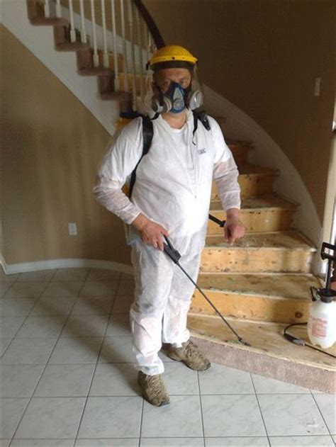 hometalk    rid  black mold