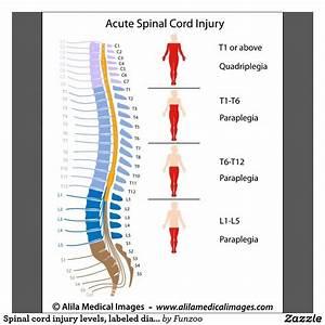 Spinal Cord Diagram