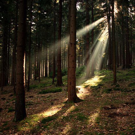 natural light photography pixelscom