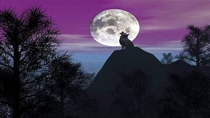 Howling Wolf Moon Wallpapers Wolves Wallpapersafari Wallpapercave