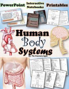 human body images human body human body unit