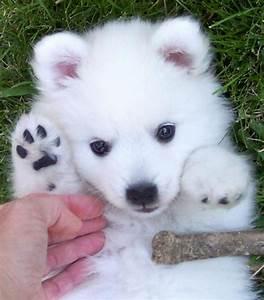 16 Super Cute Baby Puppies Photos – Design Swan